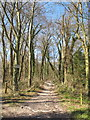 SP7701 : Track into Thickthorne Wood by David Hawgood