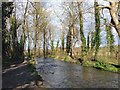 TQ5567 : River Darent by Chris Whippet