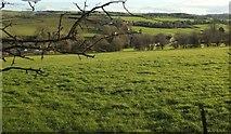 ST7156 : Wellow Brook valley at Single Hill by Derek Harper