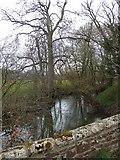 SS8302 : River Creedy from Lower Creedy Bridge by David Smith