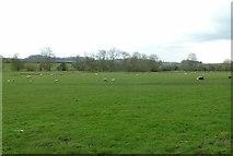 SP9599 : Field below Wakerley alongside the River Welland by Alan Murray-Rust