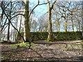 SE1238 : Walled enclosure, west of Shipley Glen by Christine Johnstone