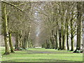 SJ6576 : Avenue of trees at Marbury Country Park by Gary Rogers