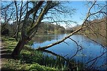 NS2209 : Culzean Swan Pond by Mary and Angus Hogg