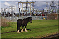 SO9793 : Horse by the Tame Valley Canal by Stephen McKay