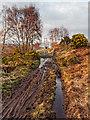 NH6236 : South Loch Ness Trail by valenta
