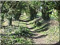 SU2985 : Path in the Hedge by Bill Nicholls