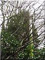 TM1298 : Wymondham ROC post - telephone pole by Evelyn Simak