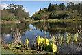 NX1558 : Lochan, Glenwham Gardens by Richard Sutcliffe