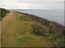 SX5645 : The coast path on Stoke Down by Philip Halling