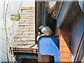 SJ9594 : Gatehouse Pigeons by Gerald England