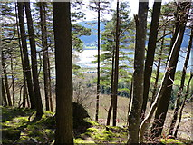 NY2427 : Derwent Foot through the trees of Dodd Wood by Anthony Foster