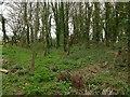 SK9202 : Earthwork in Morcott Spinney by Alan Murray-Rust