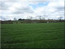 SK2331 : Grazing near Burntheath by JThomas