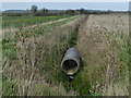 TL1098 : Pipe in a drainage ditch by Mat Fascione