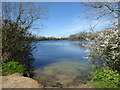 SU0194 : Neigh Bridge Lake, Neigh Bridge Country Park by Vieve Forward