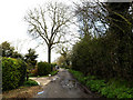 TM1854 : Allotment Lane, Ashbocking by Adrian Cable