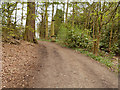 SE2712 : Track and Obelisk in Bridge Royd Wood (YSP) by David Dixon