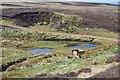 NT3849 : Decoy pond, Nether Birchy Law by Jim Barton