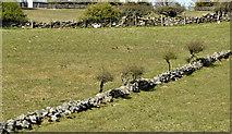 J3958 : Drystone walls, Saintfield - April 2016(2) by Albert Bridge