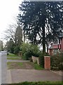 SU8759 : Monkey Puzzle tree, Park Road, Camberley by Rich Tea
