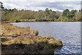 SU9353 : Henley Park Lake by Alan Hunt