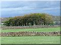 SE1865 : Farmland near Pateley Bridge (3) by Stephen Richards