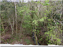 SN8001 : Tiny tributary of the River Neath, Clyne by Jaggery