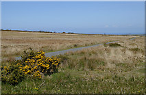 SS2620 : Bursdon Moor south-east of Hartland, Devon by Roger  Kidd