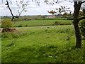 TQ4476 : Sheep and lambs at Woodlands Farm by Marathon