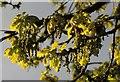 SX9065 : Oak leaves, Barton Road, Torquay by Derek Harper