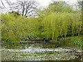 ST6601 : Duck pond, Cerne Abbas by pam fray