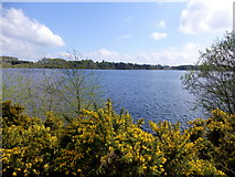H5776 : Whins at Loughmacrory Lough by Kenneth  Allen