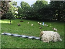 SD9772 : Scarecrow sheep in a paddock, Kettlewell by Graham Robson