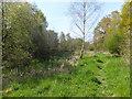 SJ3326 : Spring at Aston nature reserve by John Haynes