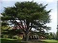 SE2812 : Ten Seated Figures beneath a cedar tree by Graham Hogg