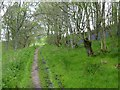 NT9305 : Path leading out of Ferny Wood by Russel Wills