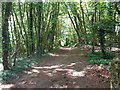 SO9538 : Wooden path, Bredon Hill by Jeff Gogarty