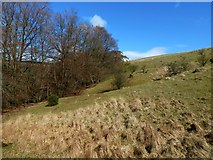 NS4177 : Trees in the Murroch Glen by Lairich Rig