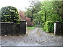 S9633 : Private driveway near Knockduff by David Purchase