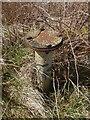 NS4959 : Barrhead ROC Bunker: FSM Mount by Lairich Rig