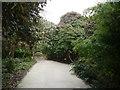 SW9946 : Lost Gardens of Heligan by Nigel Mykura