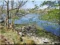 NN0636 : Loch Etive, Inverliver by Richard Webb