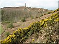 SY6187 : Gorse blossom and the Hardy Monument by Philip Halling