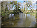 TG0218 : River Wensum by Hugh Venables