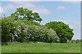 SU8046 : Hedgerow near Cheeks Farm by Alan Hunt