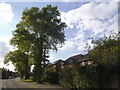 SU8885 : Lower Road, Cookham by David Howard