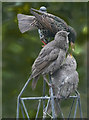 TQ2995 : Starling Family, London N14 by Christine Matthews