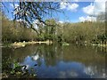 SJ8048 : Bateswood Country Park: pond in Podmore Wood by Jonathan Hutchins