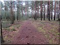 SU9319 : Pine trees, Graffham Common by Peter Holmes